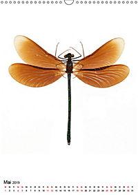 Die schönsten Insekten (Wandkalender 2019 DIN A3 hoch) - Produktdetailbild 5