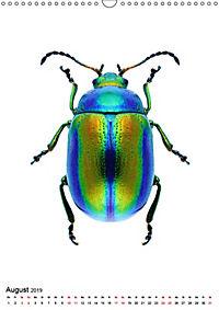 Die schönsten Insekten (Wandkalender 2019 DIN A3 hoch) - Produktdetailbild 8