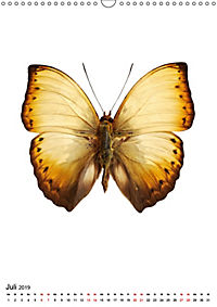 Die schönsten Insekten (Wandkalender 2019 DIN A3 hoch) - Produktdetailbild 7