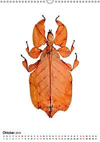 Die schönsten Insekten (Wandkalender 2019 DIN A3 hoch) - Produktdetailbild 10