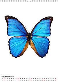 Die schönsten Insekten (Wandkalender 2019 DIN A3 hoch) - Produktdetailbild 11