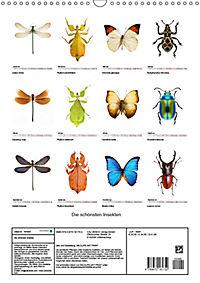 Die schönsten Insekten (Wandkalender 2019 DIN A3 hoch) - Produktdetailbild 13