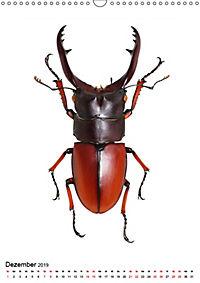 Die schönsten Insekten (Wandkalender 2019 DIN A3 hoch) - Produktdetailbild 12
