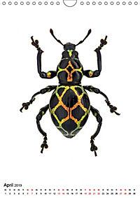 Die schönsten Insekten (Wandkalender 2019 DIN A4 hoch) - Produktdetailbild 4