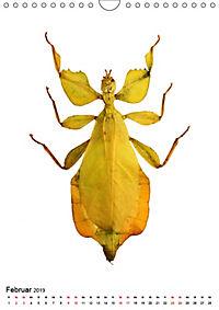 Die schönsten Insekten (Wandkalender 2019 DIN A4 hoch) - Produktdetailbild 2