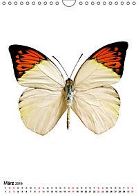 Die schönsten Insekten (Wandkalender 2019 DIN A4 hoch) - Produktdetailbild 3
