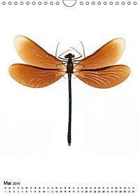 Die schönsten Insekten (Wandkalender 2019 DIN A4 hoch) - Produktdetailbild 5
