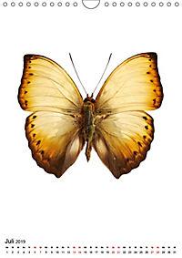Die schönsten Insekten (Wandkalender 2019 DIN A4 hoch) - Produktdetailbild 7