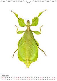 Die schönsten Insekten (Wandkalender 2019 DIN A4 hoch) - Produktdetailbild 6