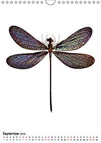 Die schönsten Insekten (Wandkalender 2019 DIN A4 hoch) - Produktdetailbild 9