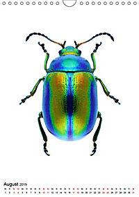 Die schönsten Insekten (Wandkalender 2019 DIN A4 hoch) - Produktdetailbild 8