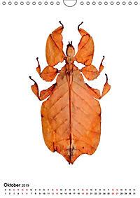 Die schönsten Insekten (Wandkalender 2019 DIN A4 hoch) - Produktdetailbild 10