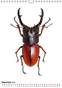 Die schönsten Insekten (Wandkalender 2019 DIN A4 hoch) - Produktdetailbild 12