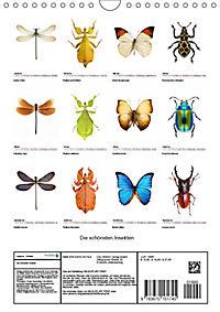 Die schönsten Insekten (Wandkalender 2019 DIN A4 hoch) - Produktdetailbild 13