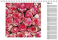 Die vielen Gesichter der Rosen (Tischkalender 2019 DIN A5 quer) - Produktdetailbild 5