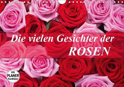 Die vielen Gesichter der Rosen (Wandkalender 2019 DIN A4 quer), Gisela Kruse