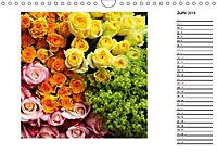 Die vielen Gesichter der Rosen (Wandkalender 2019 DIN A4 quer) - Produktdetailbild 6