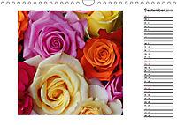 Die vielen Gesichter der Rosen (Wandkalender 2019 DIN A4 quer) - Produktdetailbild 9