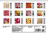 Die vielen Gesichter der Rosen (Wandkalender 2019 DIN A4 quer) - Produktdetailbild 13