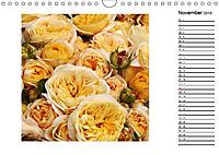 Die vielen Gesichter der Rosen (Wandkalender 2019 DIN A4 quer) - Produktdetailbild 11