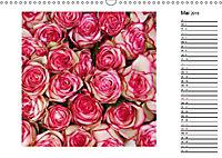 Die vielen Gesichter der Rosen (Wandkalender 2019 DIN A3 quer) - Produktdetailbild 5