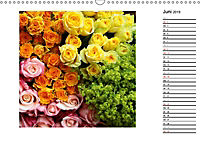Die vielen Gesichter der Rosen (Wandkalender 2019 DIN A3 quer) - Produktdetailbild 6