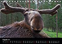 Die Vielfalt Schwedens (Tischkalender 2019 DIN A5 quer) - Produktdetailbild 8