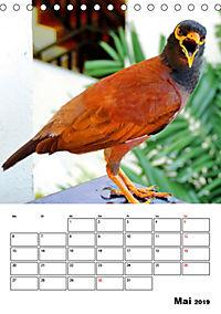 DIE VÖGEL - AUGENBLICKE (Tischkalender 2019 DIN A5 hoch) - Produktdetailbild 5