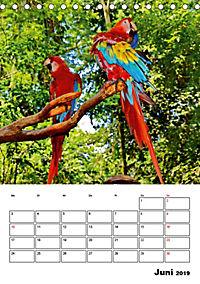 DIE VÖGEL - AUGENBLICKE (Tischkalender 2019 DIN A5 hoch) - Produktdetailbild 6