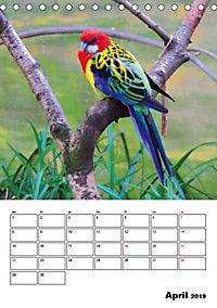DIE VÖGEL - AUGENBLICKE (Tischkalender 2019 DIN A5 hoch) - Produktdetailbild 4