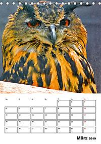 DIE VÖGEL - AUGENBLICKE (Tischkalender 2019 DIN A5 hoch) - Produktdetailbild 3