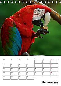 DIE VÖGEL - AUGENBLICKE (Tischkalender 2019 DIN A5 hoch) - Produktdetailbild 2