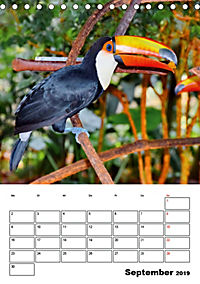 DIE VÖGEL - AUGENBLICKE (Tischkalender 2019 DIN A5 hoch) - Produktdetailbild 9