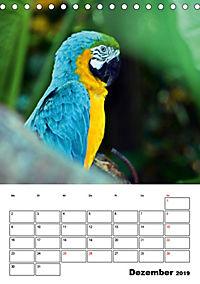DIE VÖGEL - AUGENBLICKE (Tischkalender 2019 DIN A5 hoch) - Produktdetailbild 12