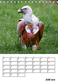 DIE VÖGEL - AUGENBLICKE (Tischkalender 2019 DIN A5 hoch) - Produktdetailbild 7