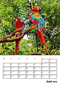 DIE VÖGEL - AUGENBLICKE (Wandkalender 2019 DIN A2 hoch) - Produktdetailbild 6