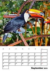 DIE VÖGEL - AUGENBLICKE (Wandkalender 2019 DIN A2 hoch) - Produktdetailbild 9