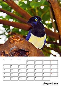 DIE VÖGEL - AUGENBLICKE (Wandkalender 2019 DIN A2 hoch) - Produktdetailbild 8