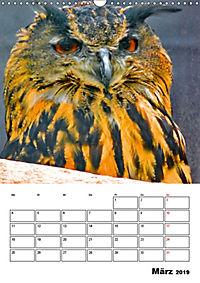 DIE VÖGEL - AUGENBLICKE (Wandkalender 2019 DIN A3 hoch) - Produktdetailbild 3