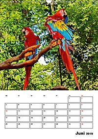 DIE VÖGEL - AUGENBLICKE (Wandkalender 2019 DIN A3 hoch) - Produktdetailbild 6