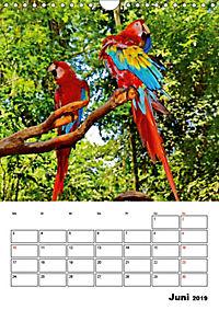 DIE VÖGEL - AUGENBLICKE (Wandkalender 2019 DIN A4 hoch) - Produktdetailbild 6