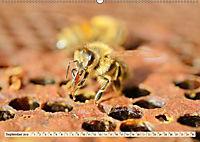 Die Welt der Imkerei: Blüten, Bienen, Honig (Wandkalender 2019 DIN A2 quer) - Produktdetailbild 9