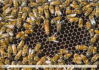 Die Welt der Imkerei: Blüten, Bienen, Honig (Wandkalender 2019 DIN A2 quer) - Produktdetailbild 5