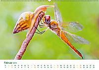 Die Welt der Libellen (Wandkalender 2019 DIN A2 quer) - Produktdetailbild 2