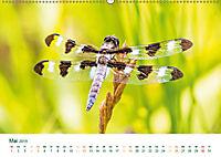 Die Welt der Libellen (Wandkalender 2019 DIN A2 quer) - Produktdetailbild 5