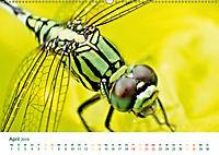 Die Welt der Libellen (Wandkalender 2019 DIN A2 quer) - Produktdetailbild 4