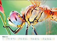 Die Welt der Libellen (Wandkalender 2019 DIN A2 quer) - Produktdetailbild 3