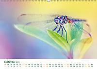 Die Welt der Libellen (Wandkalender 2019 DIN A2 quer) - Produktdetailbild 9