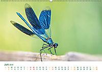 Die Welt der Libellen (Wandkalender 2019 DIN A2 quer) - Produktdetailbild 6