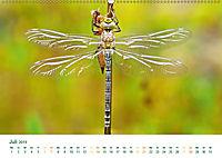 Die Welt der Libellen (Wandkalender 2019 DIN A2 quer) - Produktdetailbild 7